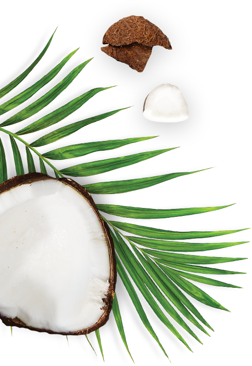 Coconut and Palm Leaf